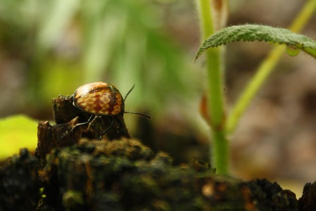 insectos de la selva amazónica